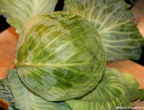 A 4 lbs Cabbage Heads